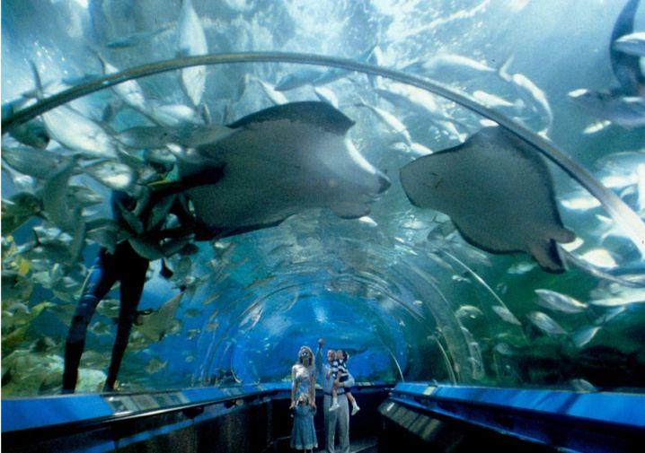 Australian marine species