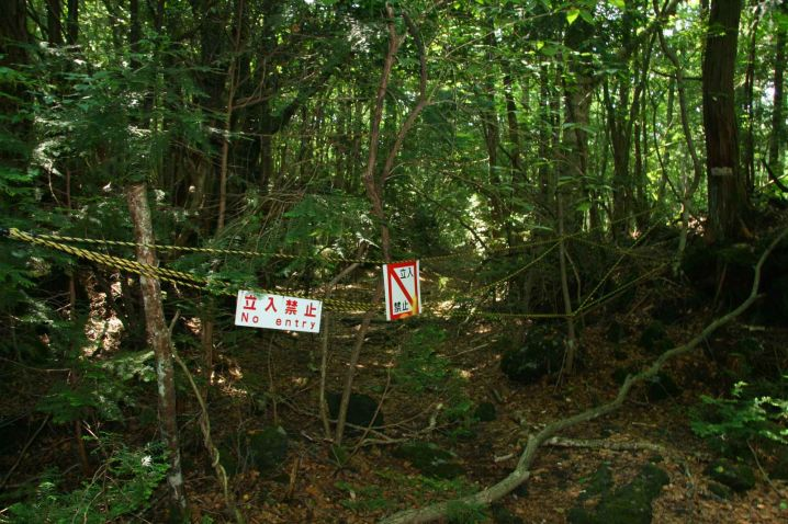 Suicide Forest of Japan