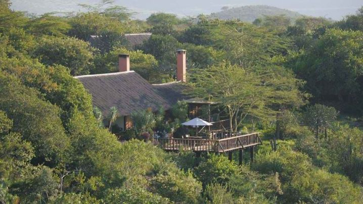 exotic wildlife of Kenya
