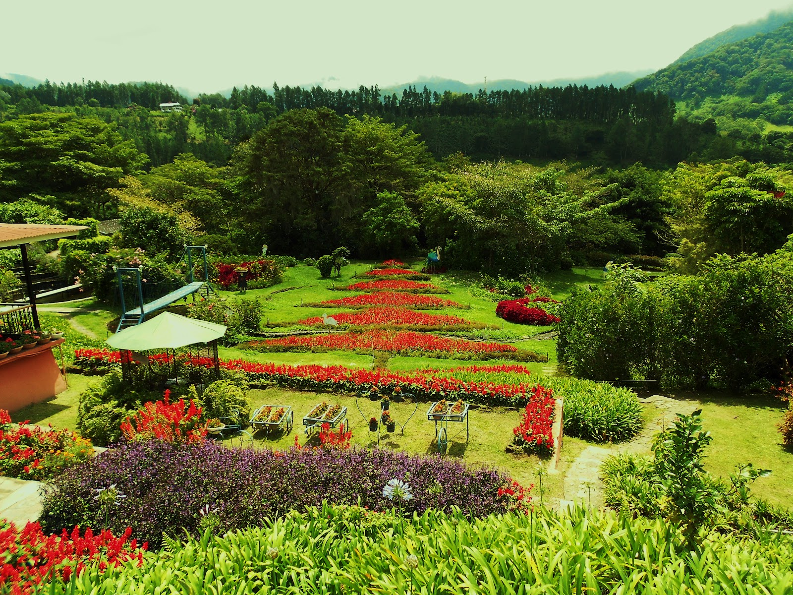 valley of the flowers