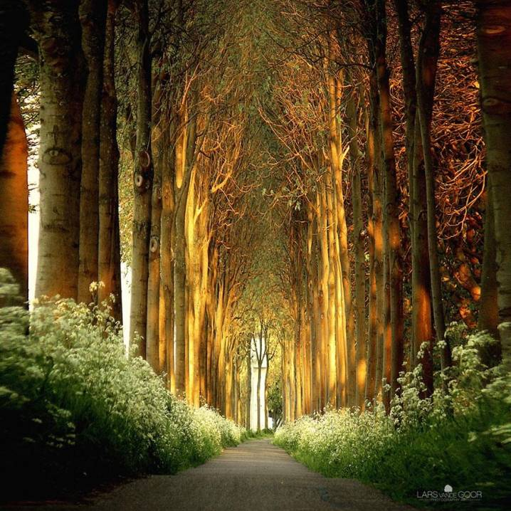 Tree Tunnel in the Netherlands