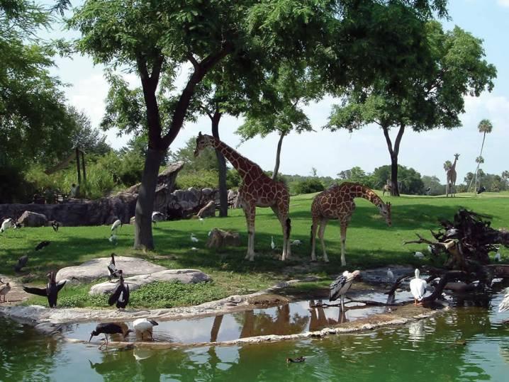 Busch Gardens Africa